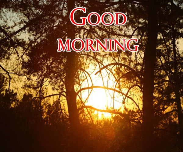 Good Morning Images For Friend