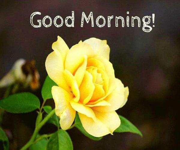 Gud Morning Wallpaper Download