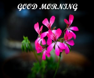 Best Good Morning Images 1080p 1080p Download