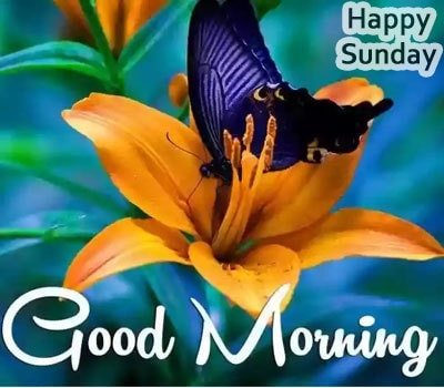 Cute Happy Sunday Good Morning Images
