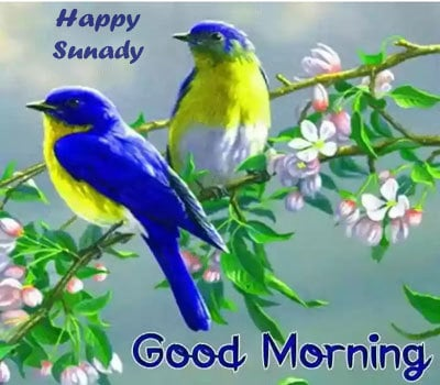 Download Good Morning Happy Sunday Images HD