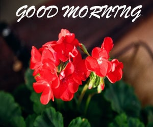Download Good Morning Images Hd 1080p