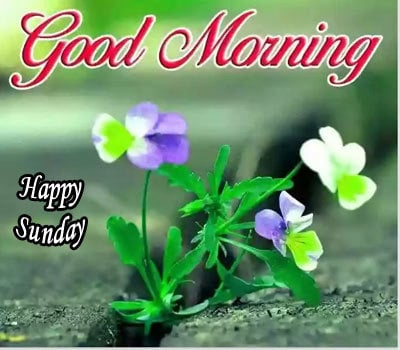 Good Morning Happy Sunday Images HD Download