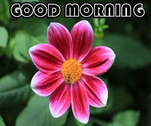 Good Morning Image Free 1080p Download