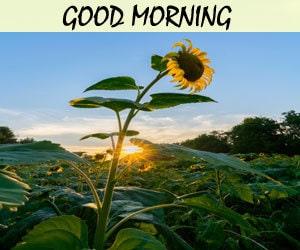 Good Morning Image Hd 1080p Download