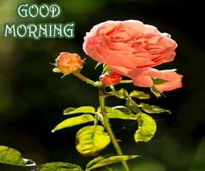 Good Morning Images 1080p Download Hd