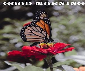 Good Morning Images Hd 1080p Desktop
