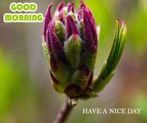 Good Morning Photos 1080p Download