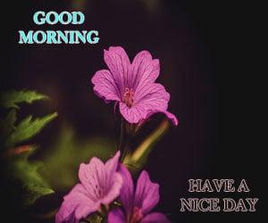 Good Morning Pic 1080p Download