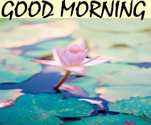 Good Morning Pics Hd 1080p Download