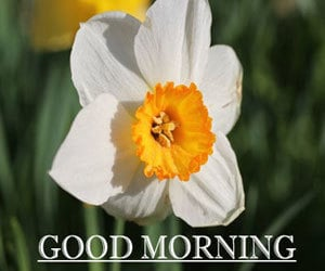 Good Morning Pictures 1080p HD Download