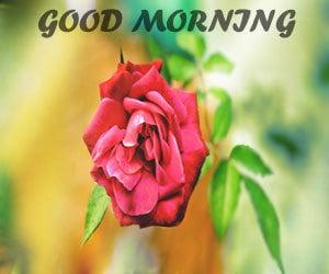 Good Morning Wallpaper Hd 1080p