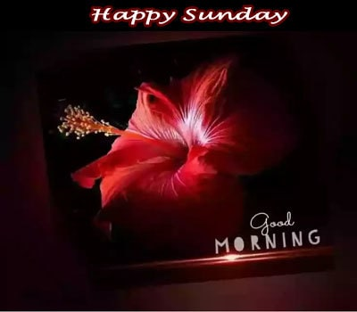 Happy Sunday Good Morning Wishes Pictures For Whatsapp