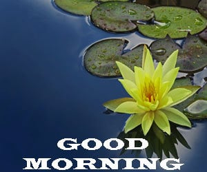 Top Good Morning Images Hd 1080p