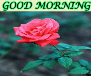 Wonderful Good Morning Images Hd 1080p Download