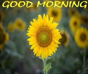 good morning photos 1080p download hd