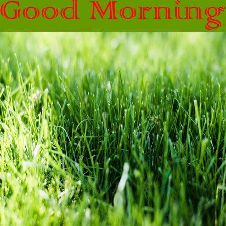 Good Morning Wallpaper For WhatsApp HD Download