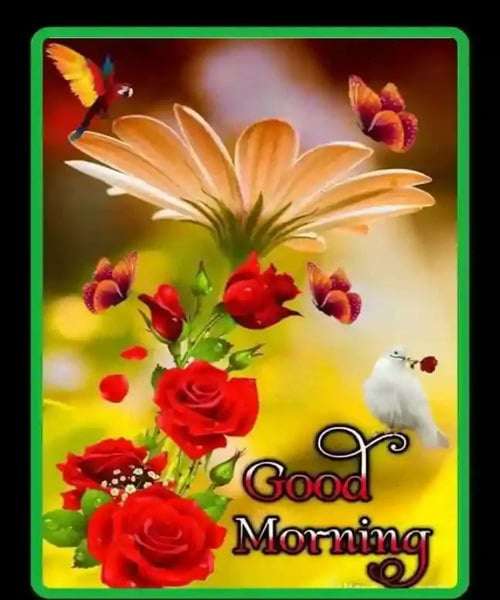 Good Morning Wishes Images Hd Download