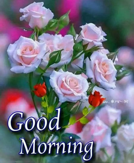 Good Morning Wishes Pics