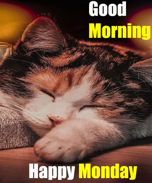 Happy Monday Good Morning Images Hd