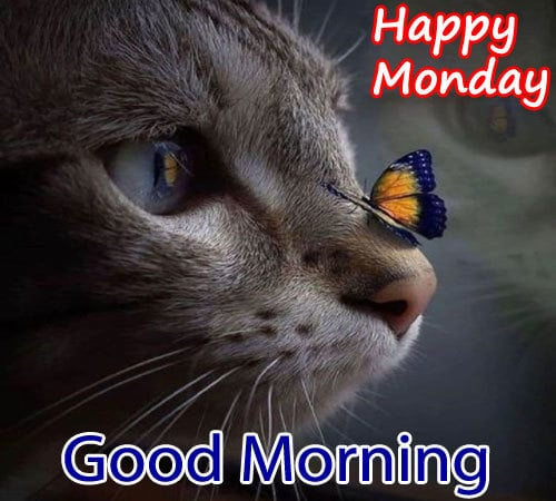 Happy Monday Good Morning Pictures