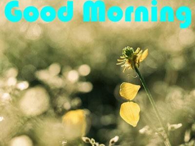 Hd Good Morning Wallpaper Download