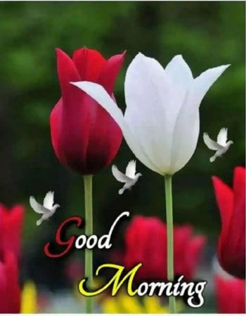 Hd Good Morning Wishes Download