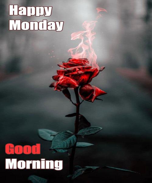 Hd Happy Monday Good Morning Wallpaper