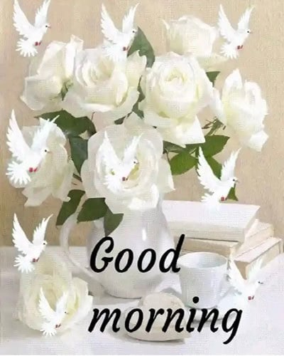 good morning pics download with flowers