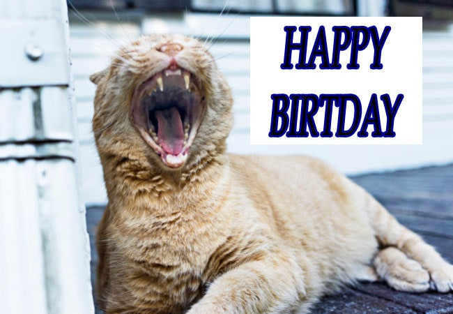 HD Funny Happy Birthday Wishes