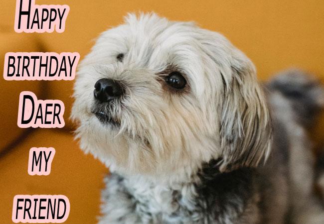 Latest Funny Happy Birthday Wishes