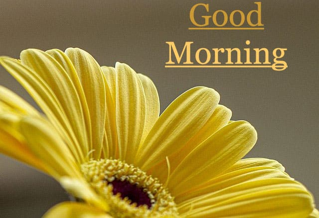 Best Good Morning Images HD 1080p Download