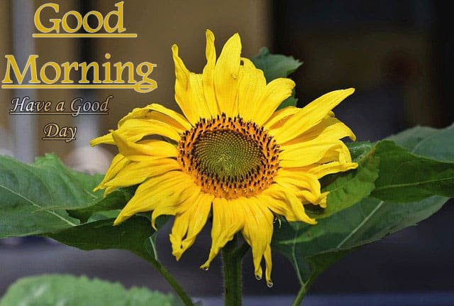 Good Morning Images HD 1080p Download For Whatsapp