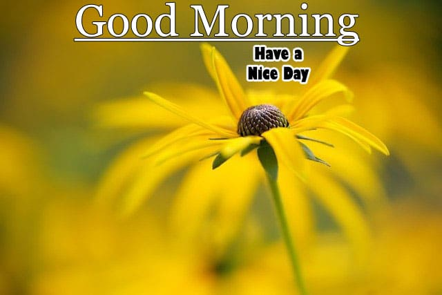 Good Morning WIshes Images HD 1080p