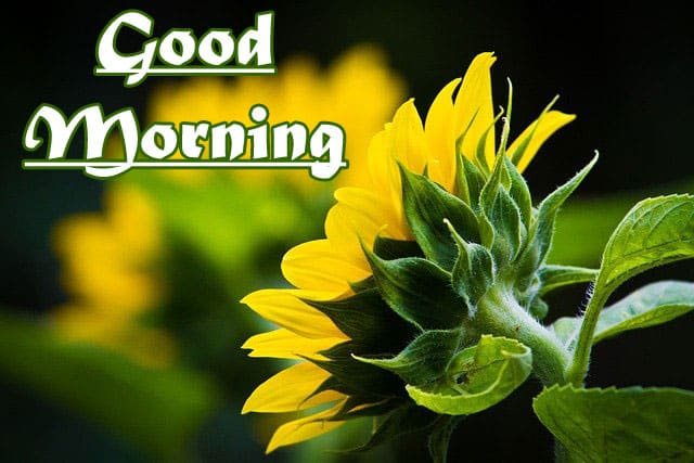 Good Morning Wishes HD 1080p Download