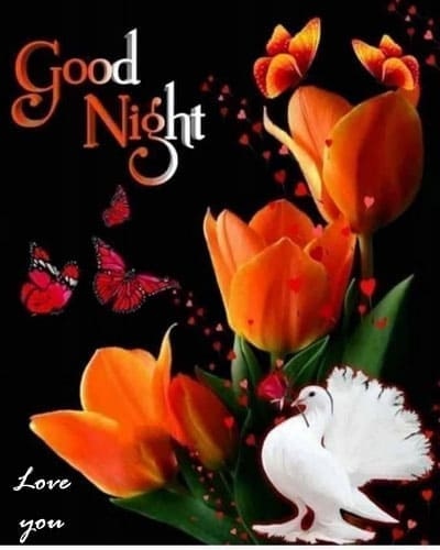 Good Night Love Pictures HD