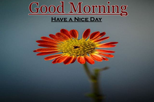 Top Good Morning Images HD 1080p Download
