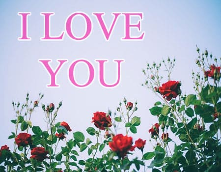 i love you photo pics images download